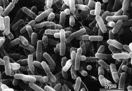 サルモネラ菌 いつ 消える